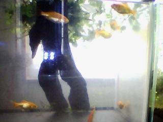 水槽にライブカメラを付けてみた。(JPEG配信編)