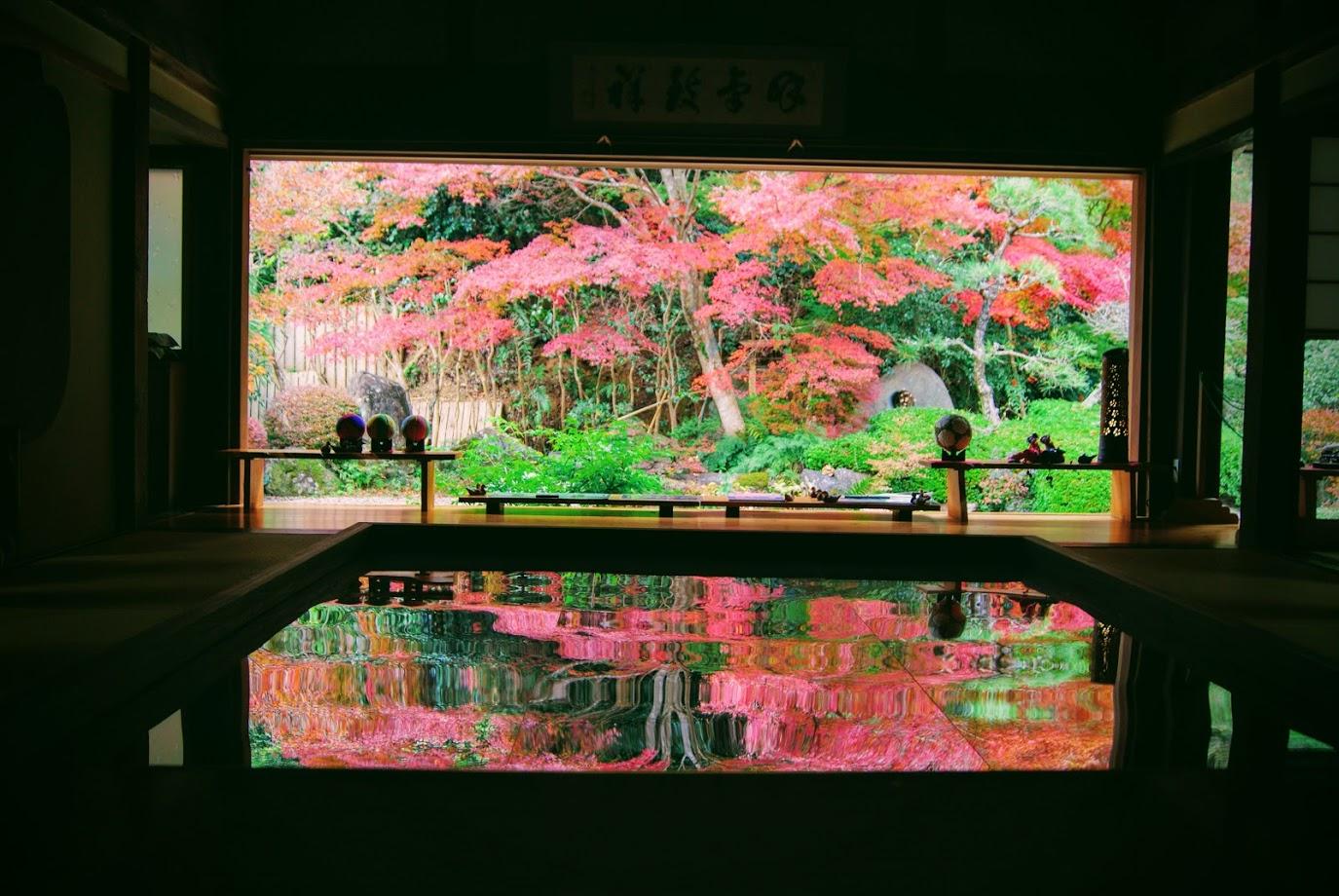 寿福寺の逆さ紅葉を見てきました。